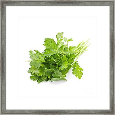 Fresh Parsley Framed Print by Elena Elisseeva