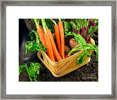 Fresh Picked Healthy Garden Vegetables Framed Print by Edward Fielding