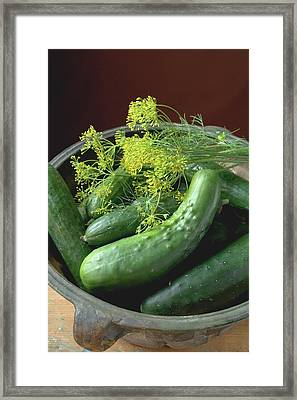 Fresh Pickling Cucumbers With Dill Framed Print