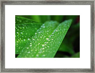Fresh Rain Drops Framed Print
