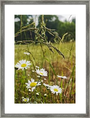 Fresh Rain Fresh Flowers Framed Print by Nathan Anglin
