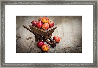 Fresh Red Apples Framed Print