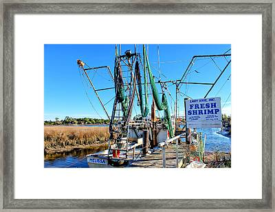 Fresh Shrimp Framed Print by Lynn Jordan