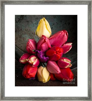 Fresh Spring Tulips Still Life Framed Print by Edward Fielding