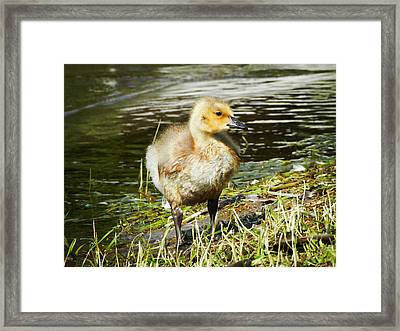 Framed Print featuring the photograph Fresh World by Zinvolle Art