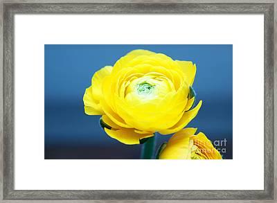 Fresh Yellow Framed Print by Tatjana Senz