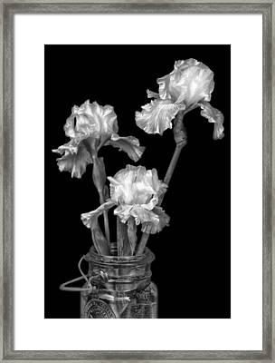 Freshly Cut - Black And White - Iris Framed Print by Nikolyn McDonald