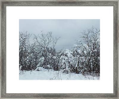Freshly Fallen Framed Print by Gene Cyr