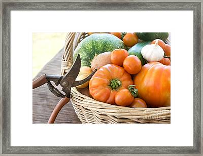 Freshly Harvested Vegetables Framed Print by Mythja  Photography