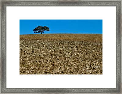 Freshly Ploughed Field     Framed Print by Heiko Koehrer-Wagner