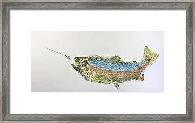 Freshwater Rainbow Trout With Fly Framed Print