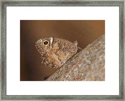 Freyer's Grayling Framed Print