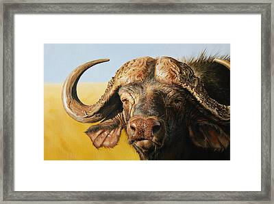 African Buffalo Framed Print by Mario Pichler