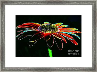 Friday Night Daisy Framed Print