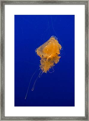 Fried Egg Jelly Framed Print by Scott Campbell