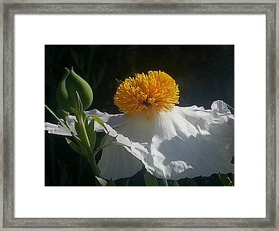 Fried Egg Poppies In The Air Framed Print