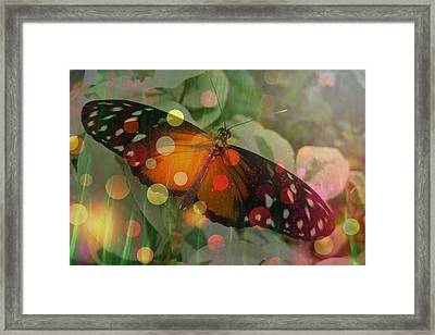 Friend Butterfly Framed Print by Shirley Sirois