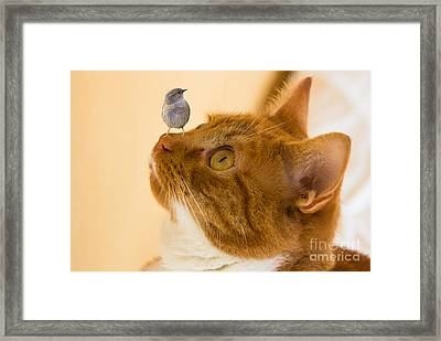 Friend Or Foe Framed Print