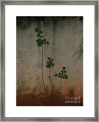 Friendless Rose Bush Framed Print