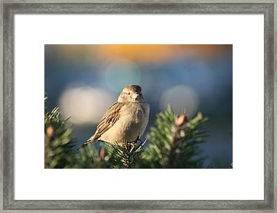 Friendly Bird Framed Print