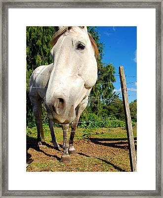 Friendly Horsey Framed Print by Mamie Gunning