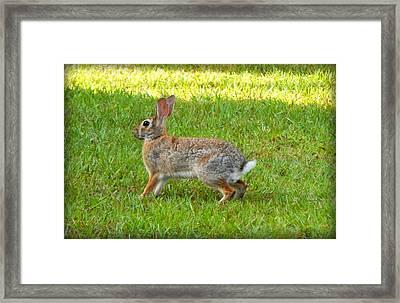 Friendly Rabbit I Framed Print by Lynn Griffin