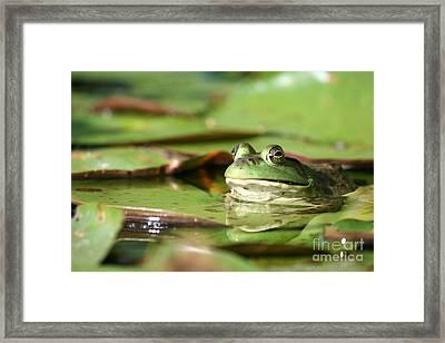 Friendly Roseland Lake Frog  Framed Print by Neal Eslinger