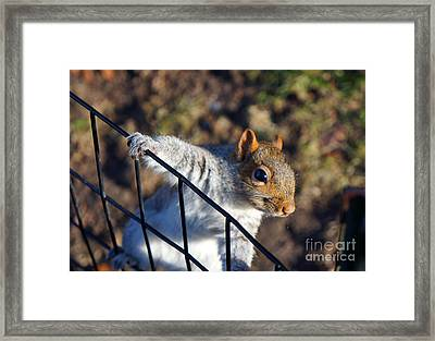 Friendly Squirrel Framed Print