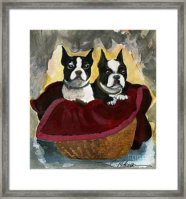 Friends.  A Pair Of Boston Terrier Dogs Snuggle In A Warm Basket. Framed Print