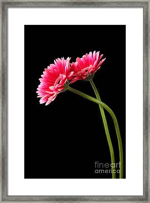 Friends Framed Print by Eden Baed