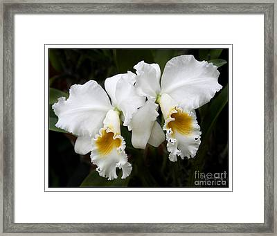Framed Print featuring the photograph Friends Forever by Mariarosa Rockefeller