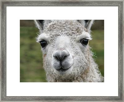 Friends From The Field Framed Print