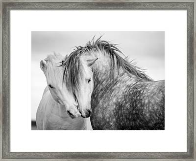 Friends II Framed Print