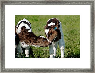 Friends Framed Print by Kim Fraser