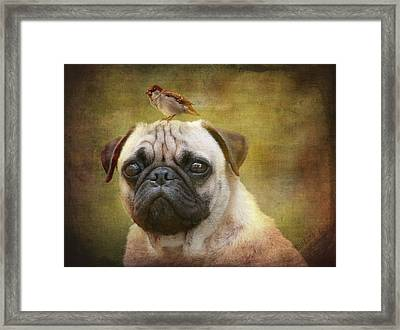 Friends Like Pug And Bird Framed Print by Barbara Orenya