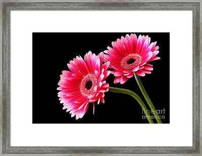 Friendship Framed Print by Eden Baed