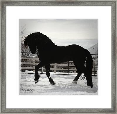 Friesian Play Framed Print