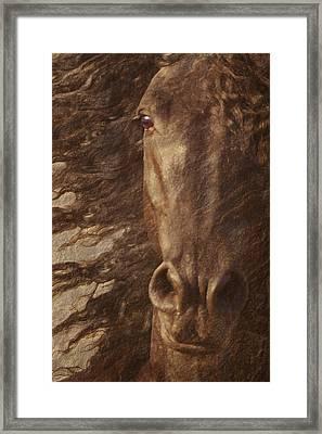 Friesian Spirit Framed Print by Melinda Hughes-Berland