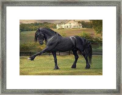 Friesian Stallion Tije Spanish Walk Framed Print by Fran J Scott