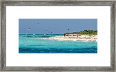 Frigatebirds And Turquoise Waters Framed Print