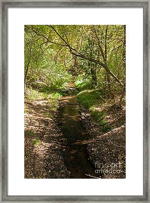 Frijole Creek Bandelier National Monument Framed Print