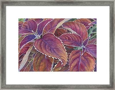 Frillery Framed Print by Sandy Haight