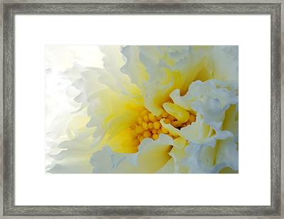 Frilling Framed Print by Wendy Wilton