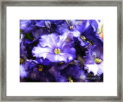 Frills Included Framed Print