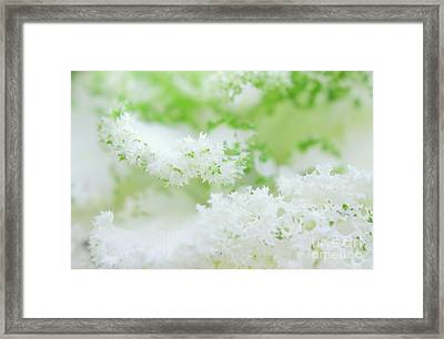 Frilly Clouds Framed Print by Charline Xia