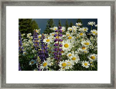 Framed Print featuring the photograph Frisco Flowers by Lynn Bauer