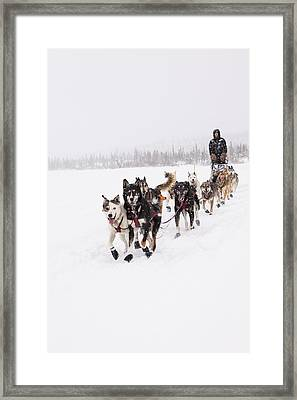 Frisky Lead Dogs Framed Print