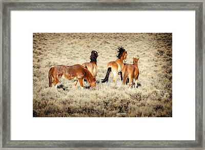Frisky Mustangs Framed Print by Yeates Photography
