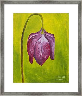 Fritillary Flower Framed Print