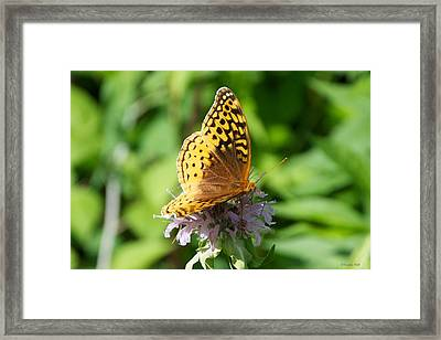 Frittillary And Pink Bee Balm Framed Print